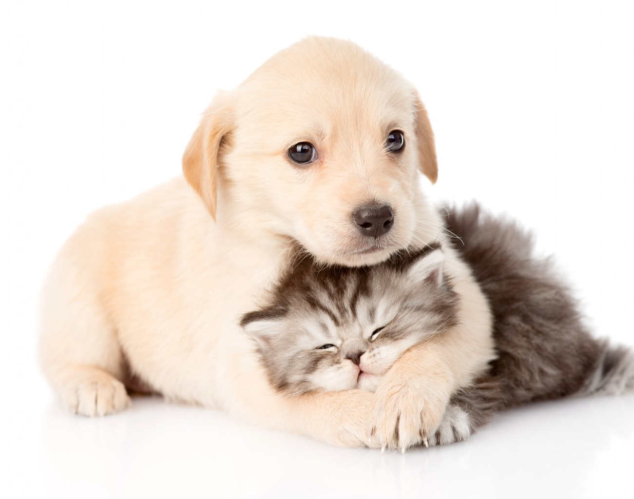 calin,chien,chat,mignon